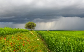 Picture the sky, grass, landscape, flowers, clouds, rain, tree, meadow