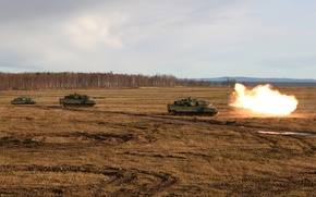 Picture field, forest, shot, trio, Tanks