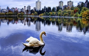 Picture the city, pond, Swan