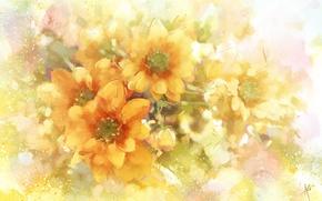 Picture flowers, orange, chrysanthemum