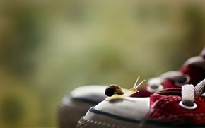 Picture macro, background, sneakers, snail