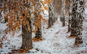 Picture autumn, the city, birch