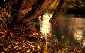 Picture autumn, water, strips, nature, lake, strip, river, yellow fallen leaves