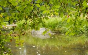 Picture autumn, flower, grass, nature, berries, stream, widescreen, plants, wallpaper, widescreen, background, the Wallpapers, full screen, …