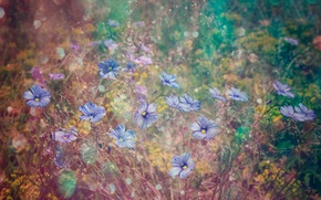 Picture grass, flowers, blur