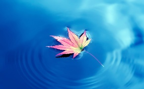 Picture water, Autumn, water, Autumn, maple leaves, maple leaf
