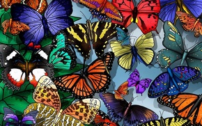 Picture butterfly, beautiful, easy