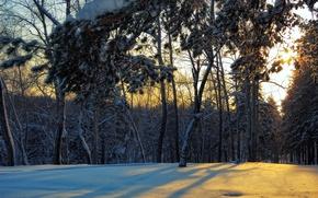 Picture winter, forest, landscape