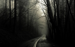 Wallpaper black and white, trees, forest, Road