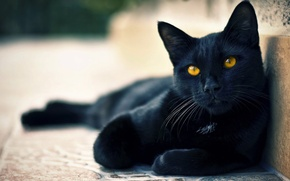 Picture eyes, cat, mood, black, cute, cat, beautiful, tail, ears, cat, green