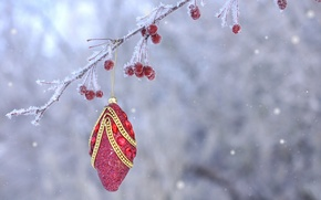 Picture frost, berries, toy, new year, Christmas, branch, fruit, decoration