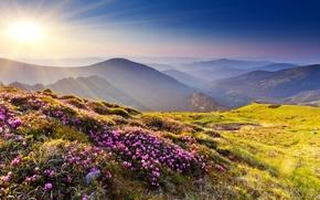 Picture grass, the sun, rays, flowers, mountains, nature, stones, hills, Azalea