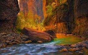 Picture autumn, stones, rocks, Utah, USA, Zion National Park, the river virgin