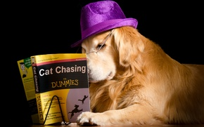 Picture dog, hat, book