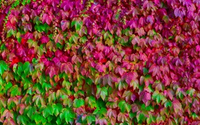 Picture leaves, color, macro, green, pink, texture, a lot