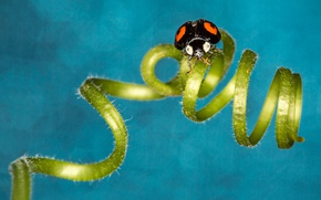 Picture bokeh, ladybug, spiral, insect, curl, ladybird, tendril