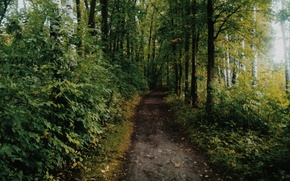 Picture autumn, forest, trail