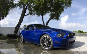 Picture blue, Mustang, 5.0, 2013