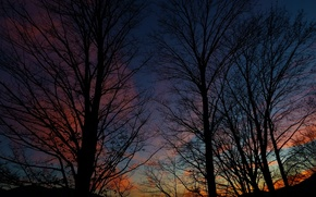 Picture the sky, trees, nature, the evening, Nature, silhouettes, sky, trees, evening