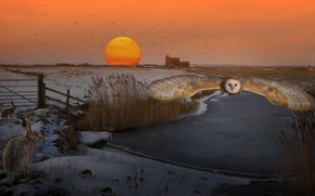 Picture winter, field, the sun, flight, sunset, rendering, dawn, owl, art, rabbits, pond, Wallpaper from lolita777