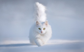 Picture winter, cat, snow