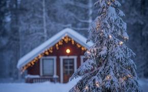 Picture winter, house, spruce, garland, Finland, Finland, Lapland, Lapland
