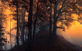 Picture forest, trees, sunset, mountains, nature, the evening
