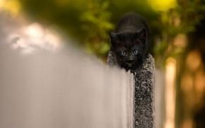 Picture cat, kitty, background, black, the fence, small, muzzle, hero, cute, afraid, bold, saborosas