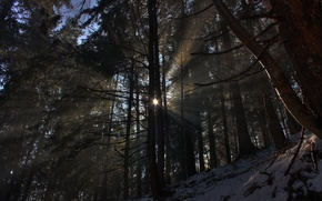 Picture winter, forest, the sun, rays, light, snow, trees, nature, photo