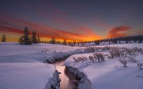 Picture winter, snow, trees, river, rasvet