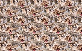 Wallpaper art, texture, kittens, sleep