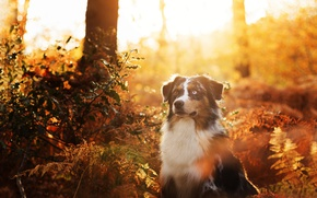 Picture autumn, each, dog