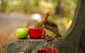 Picture autumn, leaves, bench, Apple, protein, mug, tail, animal, curiosity