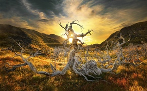 Picture light, mountains, tree