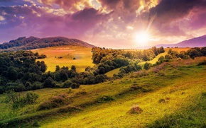 Picture the sun, trees, flowers, nature, hills, clearing, trees, nature, flowers, sun, hills, meadow, lawn