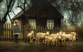 Picture sheep, village, girl