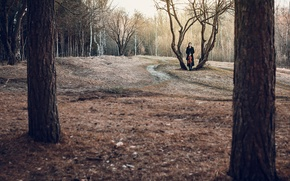 Picture forest, girl, loneliness, viola