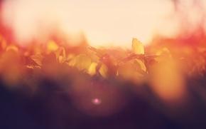 Wallpaper morning, macro, dawn, leaves, bokeh, summer, the sun, glare