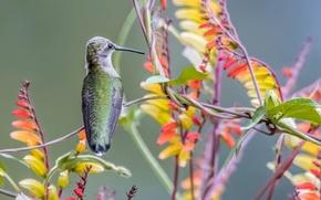 Wallpaper Hummingbird, paint, bird, nature, beak, plant