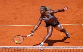 Picture sport, tennis, Serena Williams