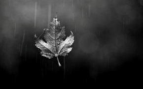 Wallpaper autumn, glass, drops, sheet, rain, leaf, black and white, bokeh