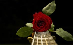 Wallpaper rose, music, guitar