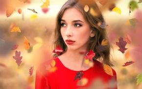 Picture sponge, the beauty, falling leaves, Inese Stoner