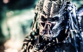 Picture predator, being, Predator, thing