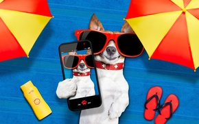 Picture Dog, Glasses, Animals, Smartphone, Jack Russell Terrier