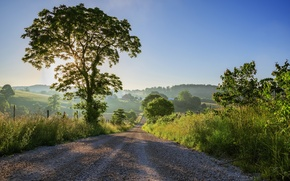 Picture road, tree, morning