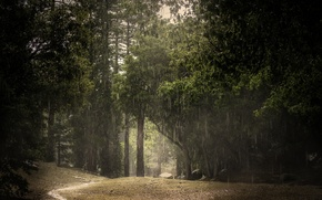 Picture forest, summer, rain