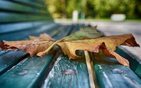 Picture autumn, macro, sheet, bench