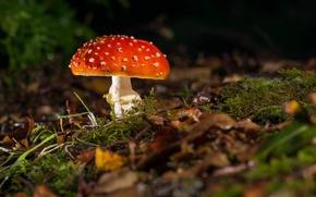 Picture grass, leaves, mushroom, moss, mushroom, dry