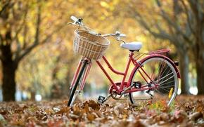 Picture leaves, bike, street